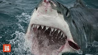 25 TERRIFYING Shark Attack Stories