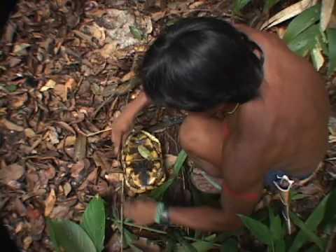 HOW AMAZON INDIANS HUNT TURTLES