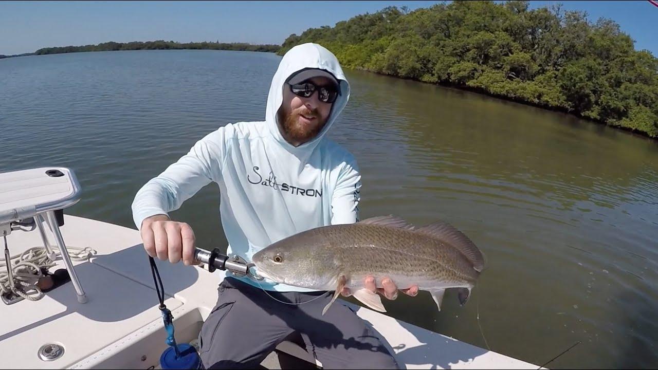 Anclote key fishing report inshore fishing redfish for Fishing report mexico beach fl