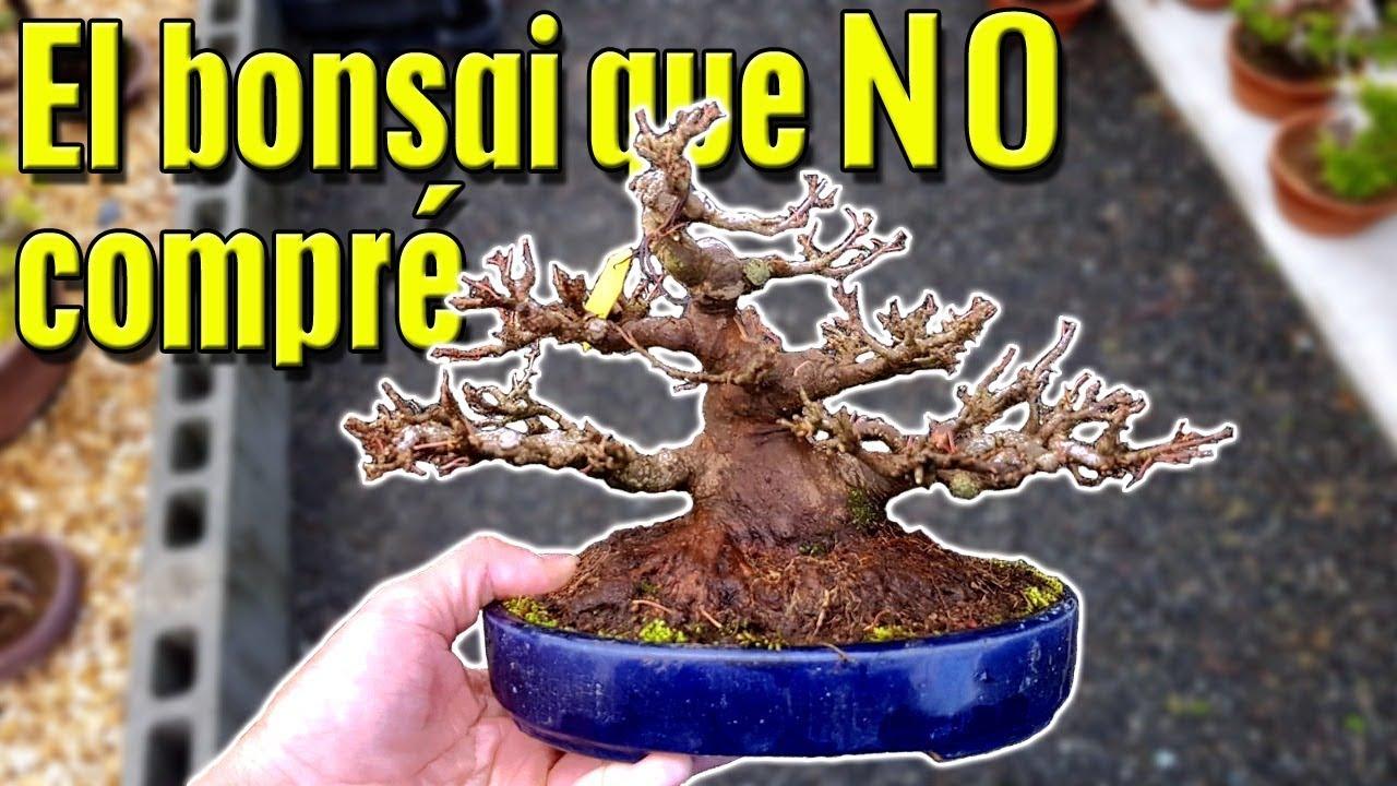 El Bonsai Que No Compré En Japón Youtube