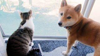 春の風が心地よさそうな犬と猫