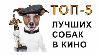 ТОП-5 ЛУЧШИХ СОБАК В КИНО