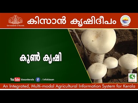 Documentary on various aspects of Mushroom Cultivation -619