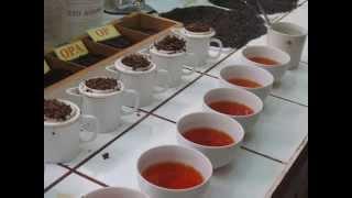 Rwanda Tea Plantation visit