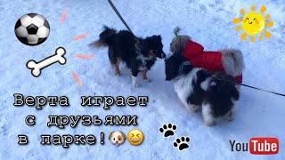 Весенние прогулки с собакой ши-тцу || Игры с собакой на улице!