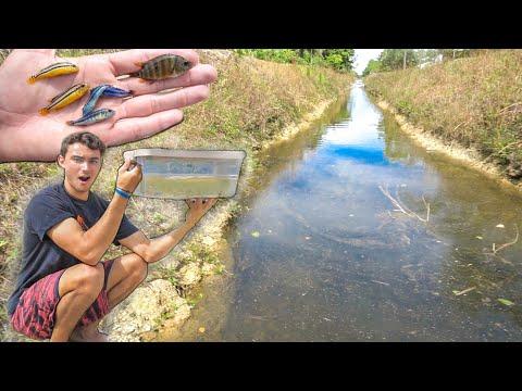 Plastic FISH TRAP BIN Catches CRAZY EXOTIC Fish!