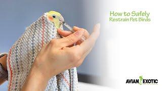 How to Safely Resтrain Pet Birds
