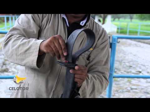 Dispositivo para detección de celo bovino - cinturón