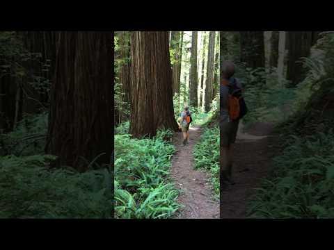 A sense of perspective: Redwood National Park