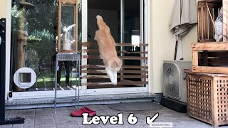 Cat vs Packaging Tape  My Cats jumping high for beef in a challenge