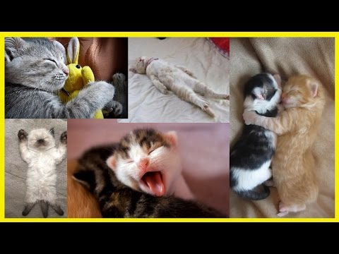 Funny Sleeping Cat - Cute Cat Sleeping - Cats Sleeping in Weird Positions Compilation