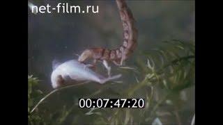 Пресноводные хищники: жук плавунец и стрекоза. Враги мальков рыб