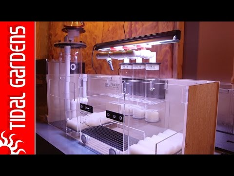Sumps and why are they the greatest thing ever for reef aquariums