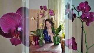 Новая орхидея красавица ✿ Распаковка посылки с фаленопсис Phalaenopsis(Подписаться на новые видео https://www.youtube.com/user/BAGIRA7722/featured Орхидея ароматный попугай в посылке ㋛https://www.youtube.com/watc..., 2016-08-16T14:56:34.000Z)