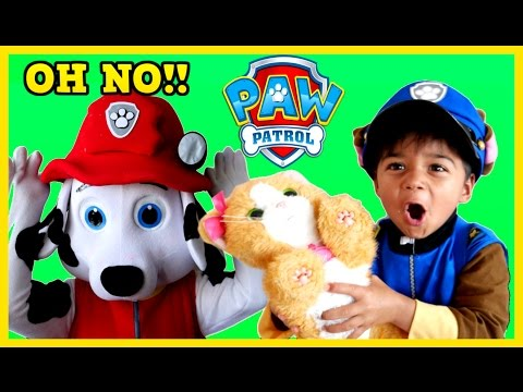 Thumbnail: Paw Patrol Videos in REAL LIFE Rescue PAW PATROL HUGE EGGS Surprise Toys Marshall Chase Rescue Cat