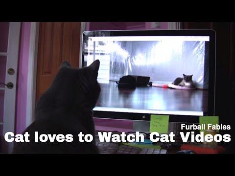 Cat Yogi Watches Cat Video of Furballs
