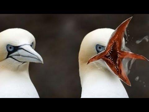 Dünyanın En Garip 10 Kuş Türü - Gerçekten Var Olduğuna İnanamayacaksınız.