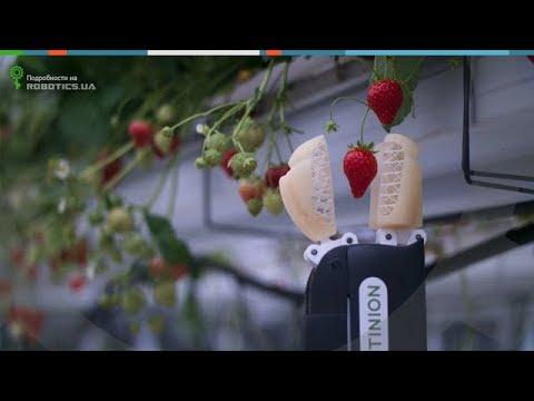 Робот для сбора клубники Octinion (Robotics.ua)