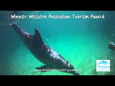 Dolphin Discovery Centre Bunbury Official Video
