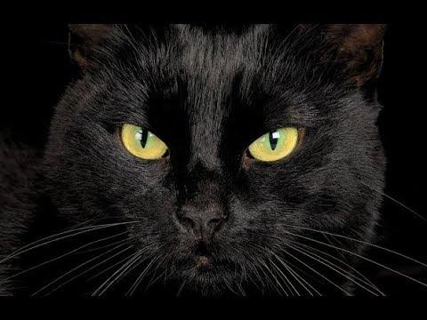 Хозяин похоронил и оплакал кота, а тот утром вернулся домой...