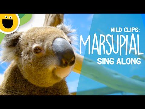 Marsupial Sing-Along | Wild Clips (Sesame Studios)