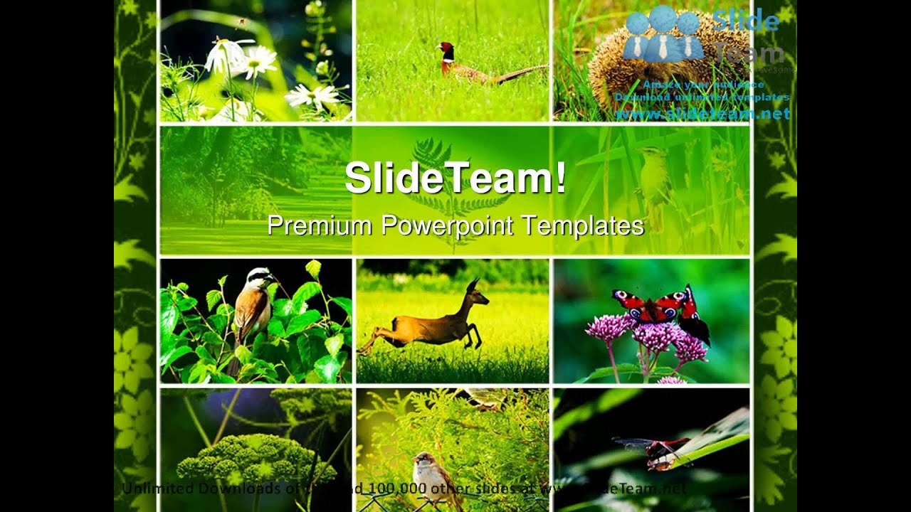 Wild nature animals powerpoint templates themes and backgrounds wild nature animals powerpoint templates themes and backgrounds ppt designs youtube toneelgroepblik