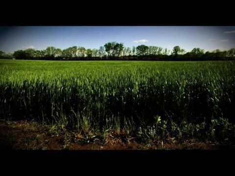 Duke's Field of Dreams - Greenville, Illinois