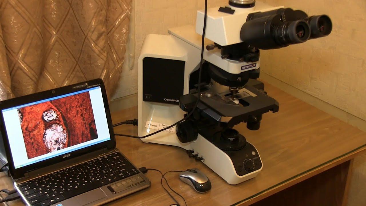 Лабораторія морфології сполучної тканини.
