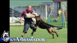 Family Protection Dog - Frank / K9 Ambassador