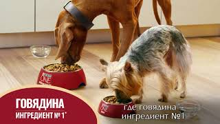 Purina ONE®. Разработано экспертами для здоровья Вашей собаки
