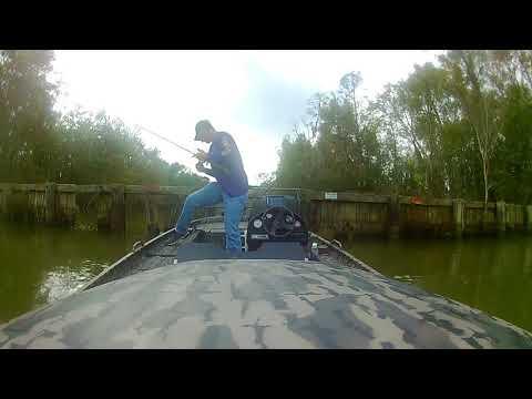Louisiana Fishing Trip In Bayou Black (Gibson, LA), 11-08-17
