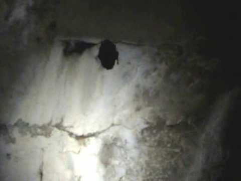 Abandoned villa (underground tunnels) (CiG)