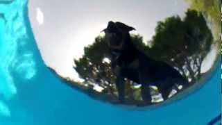 rottweiler splash underwater gopro test in the swimming pool
