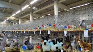 Очень много красивых кроликов, есть новые окрасы/Ульм Германия