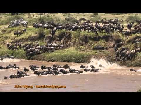 The Great Migration -- on safari in Tanzania's Serengeti with Africa Odyssey -- The Great Migration