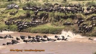 The Great Migration -- on safari in Tanzania