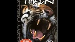 Bengalintiikeri DVD