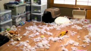 我が家の破壊・・・・・ それは、この日から始まった・・・・ たった一...