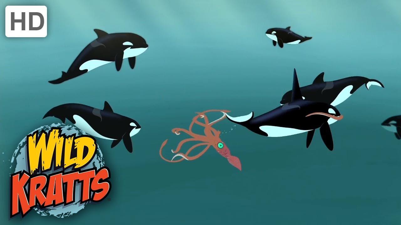 Wild Kratts |Animals ATTACK| Orca VS Giant Squid!