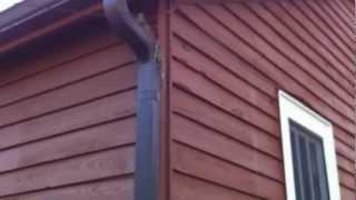 Bird nest in home
