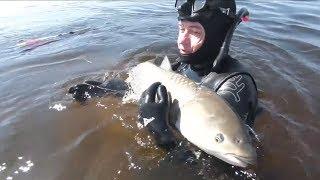 Подводная Охота Самые Большие Рыбы добытые из Лучших Ружей Сом Сазан Амур Судак Толстолобик