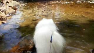 2010-07-26 レジーナの森【中の沢川】②.AVI