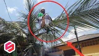 Orang sakti duduk di pelapah pohon kelapa hebohkan warga, Ternyata Ini faktanya..