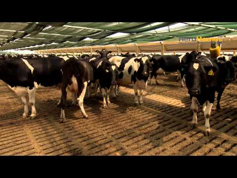 new zealand sustainable dairy farm New zealand dairy scene, east of detailed the impact of farming without subsidies new zealand has around 80,000 farm holdings on 155.