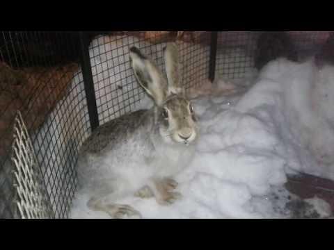 Заяц, а давай играть?