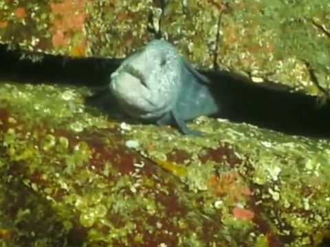 Feeding Sea Urchin To Wolf Eel Youtube