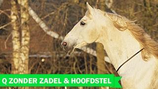My dream came true, Q & Eva Roemaat riding with neckrope..