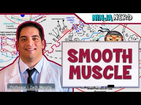 Myology | Smooth Muscle