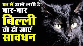 घर में आने लगी है बार-बार बिल्ली, तो हो जाएं सावधान | Billi (cat) ke subh or asubh sanket sign