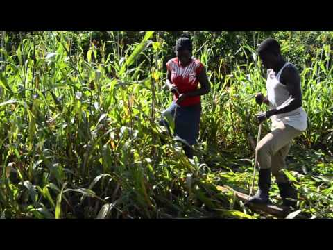 Trials of organic no-till in Isegeretoto School